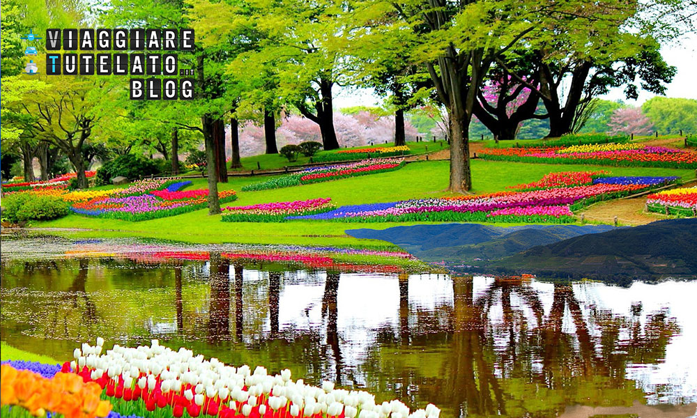 Olanda: visita al Keukenhof Park, la casa dei tulipani.